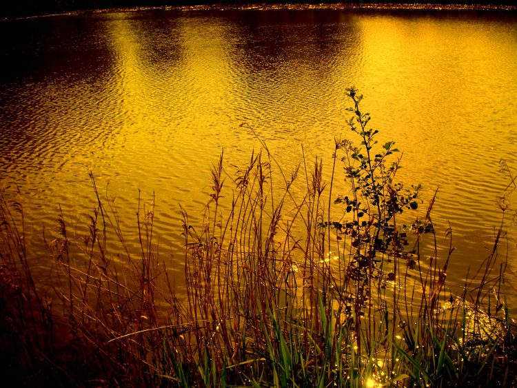 Twilight at the pond – Jastrzębie-Zdrój ,Silesian Voivodeship , Poland