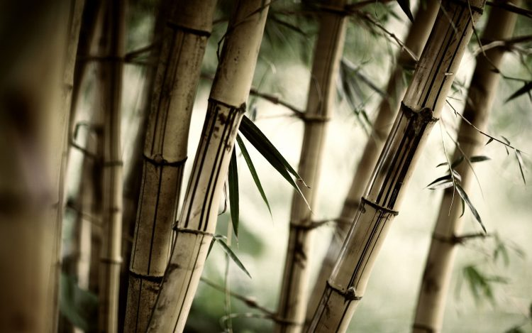 bamboo, leaves, grass
