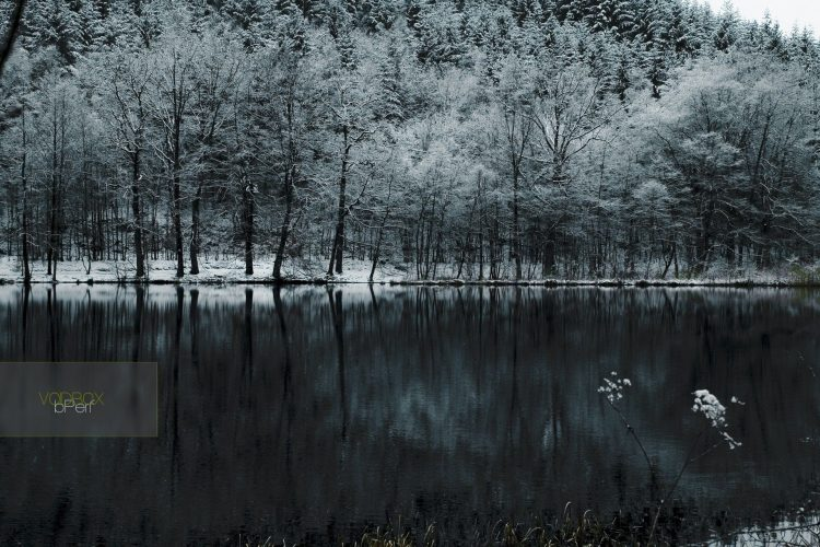 forest, snow, Lake, cold