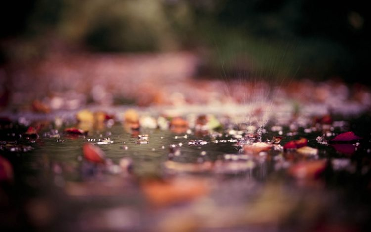 macro, puddles, autumn, leaves, Photos, water, drops, spray, park