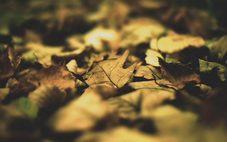 macro, sheet, leaves, photo, wallpaper
