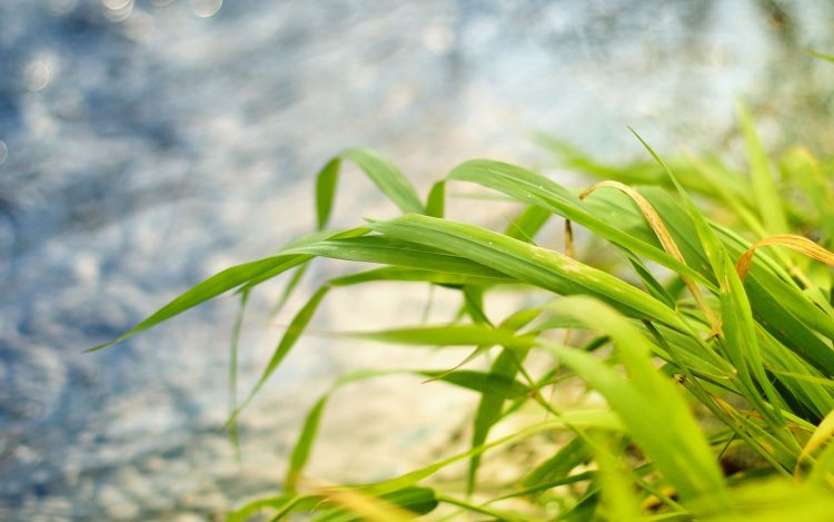 nature, Photos, macro, wallpaper, grass, leaves, Plants