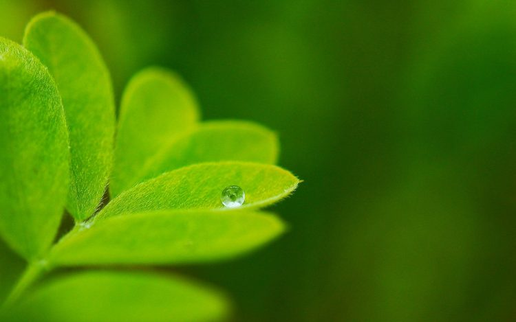 nature, Plants, leaflet, greens, macro, drop, background, wallpaper