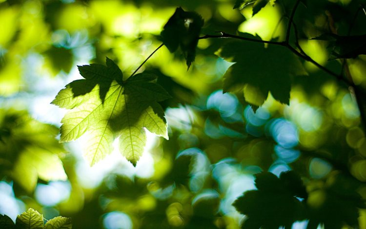 nature, Trees, leaves, foliage, summer, forest, light, day