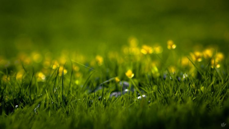 nature, spring, summer, Flowers, grass, grass, grass, blade, greens, freshness