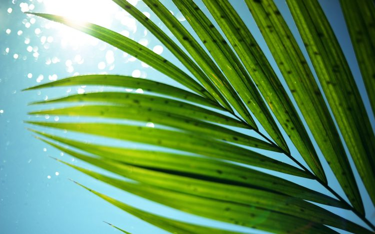 palm, sun, sky, leaves, summer