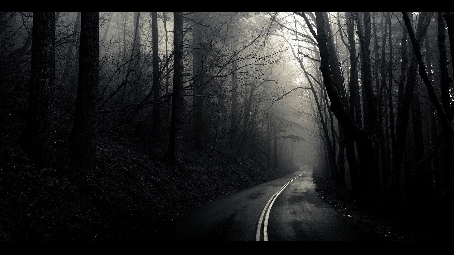 Road Forest Trees Black And White Hd Wallpaper Desktop