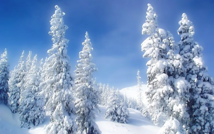 winter, snow, cold, Trees