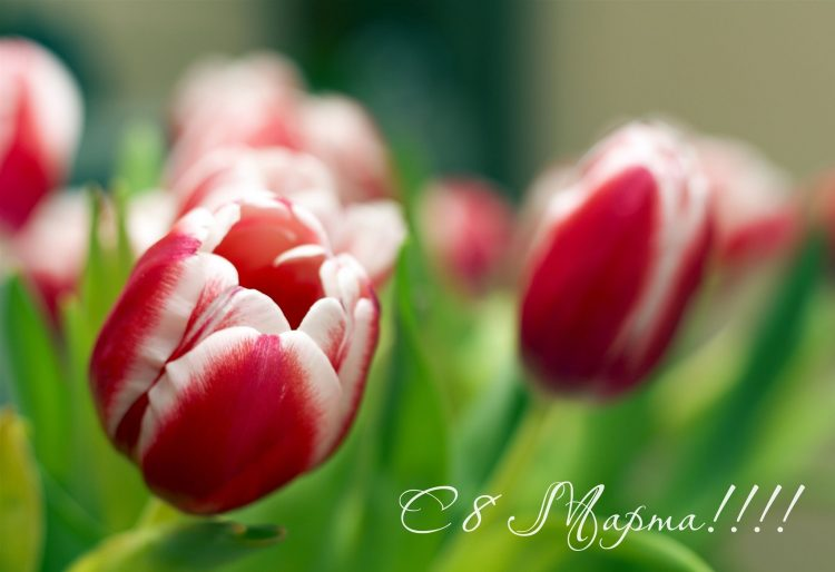 March 8, Flowers, background