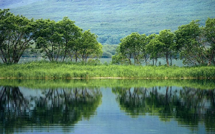 Trees, pond, reflection