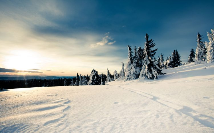 snow, winter, forest, sky