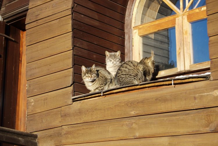 Cats Kote spring window dacha heat