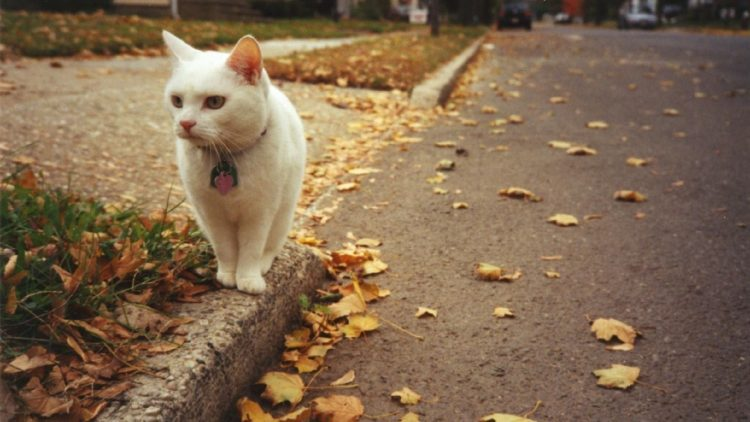 Cats autumn leaves defoliation road asphalt