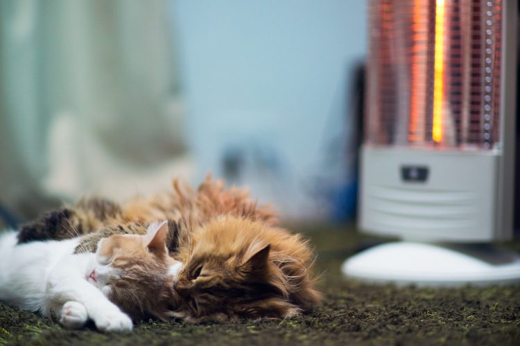Cats floor sleep heater carpet