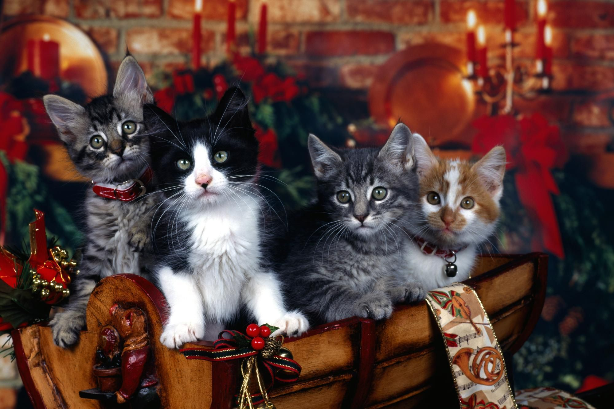 Cats four New Year holiday Christmas decorations collar - HD wallpaper desktop backgrounds