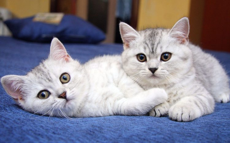 Cats pair two eyes