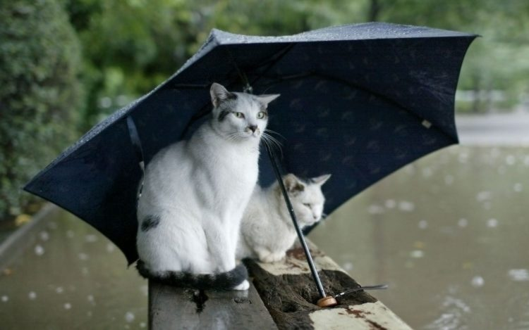 Cats sit umbrella rain