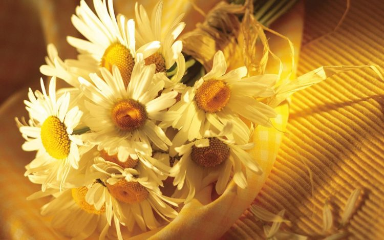 bouquet Chamomile Flowers summer