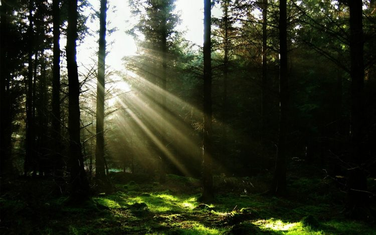 light forest sun Rays
