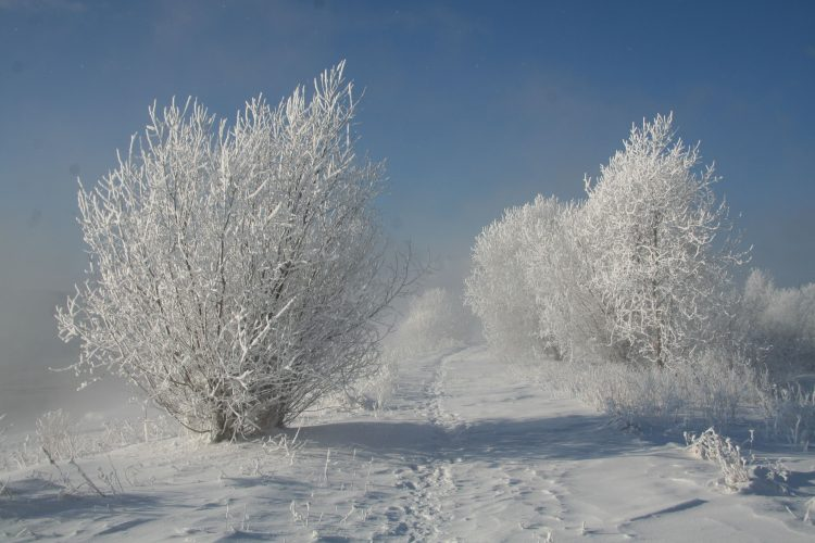 nature Trees snow winter