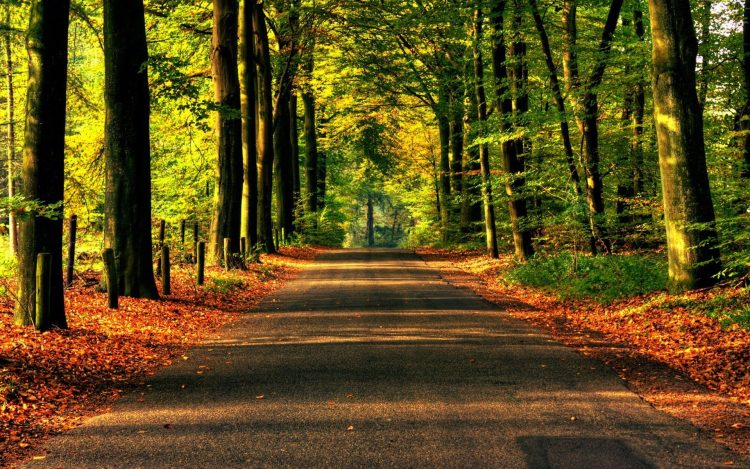 nature road forest Trees asphalt