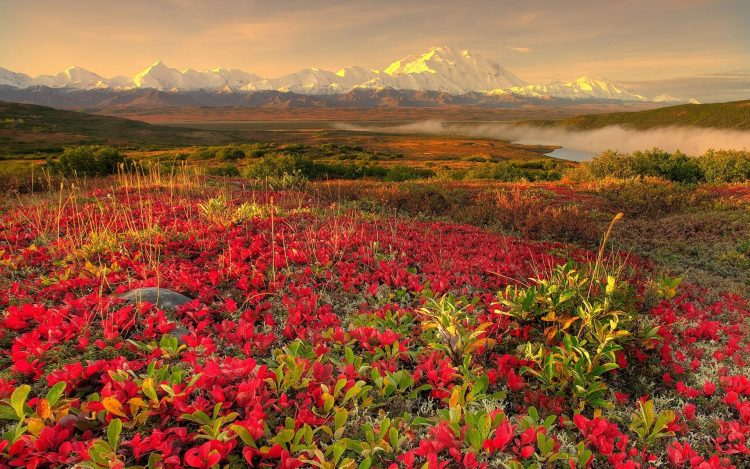 Flowers hills and mountains in the distance, , Pc, hd, wallpapers , desktop backgrounds, images, pictures