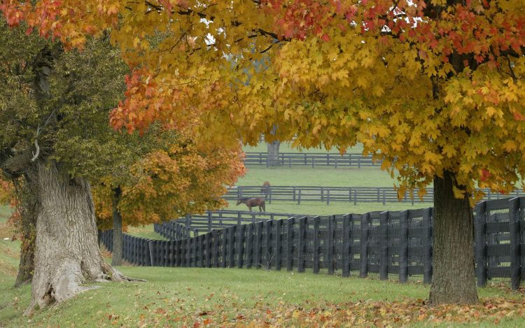 Horses Trees leaves grass fence