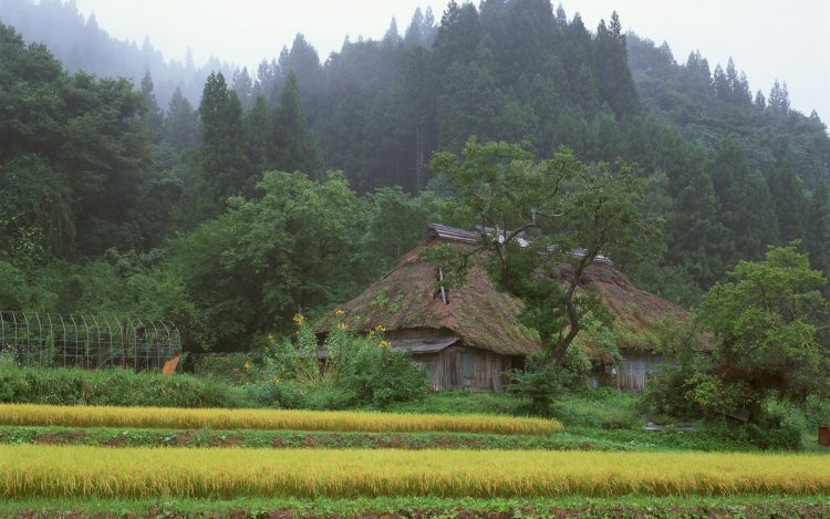 Japan home forest