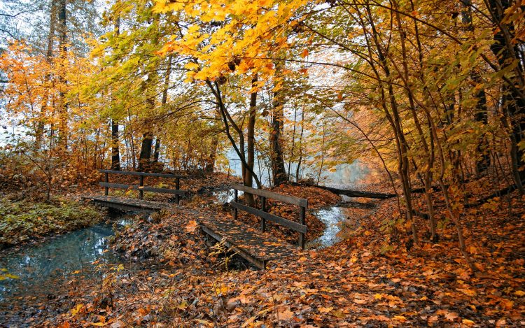 Pictures, nature, photos, place, Trees, leaves, hd  desktop wallpapers , Pc backgrounds, free pictures