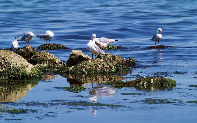 Sea, Gulls, water, hd  desktop wallpapers , Pc backgrounds, free pictures