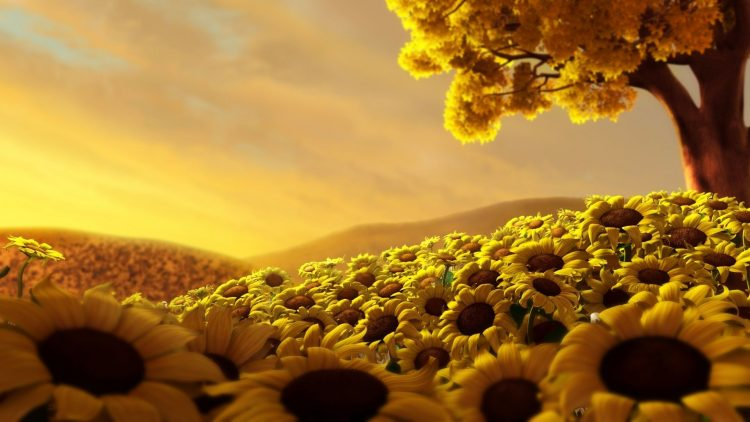 Sunflowers, field, tree, sky, hd  desktop wallpapers , Pc backgrounds, free pictures
