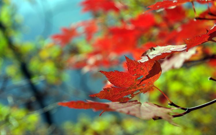 Trees, forest, Park, defoliation, leaves, hd  desktop wallpapers , Pc backgrounds, free pictures