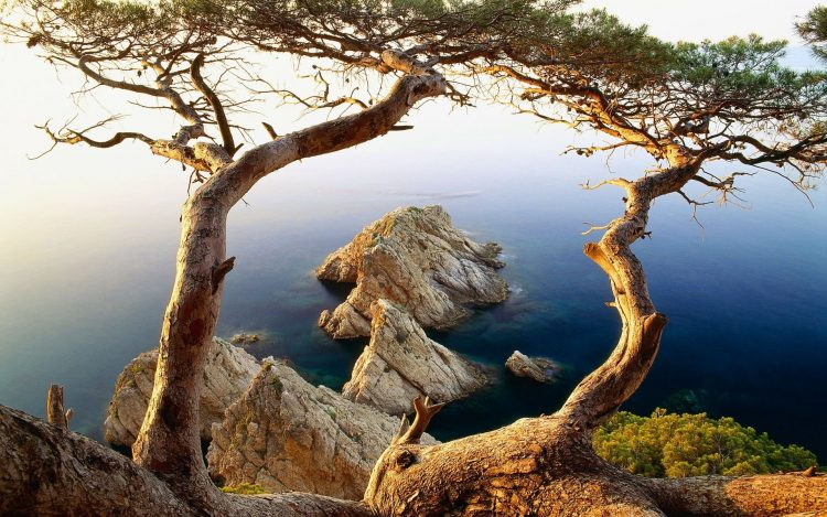 Trees, rock, water, hd  desktop wallpapers , Pc backgrounds, free pictures