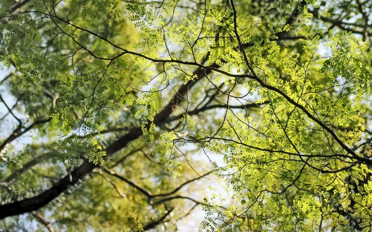 Trees, tree, branches, branch, fox, sheet, hd  desktop wallpapers , Pc backgrounds, free pictures