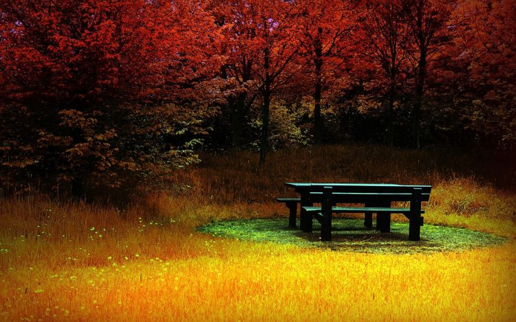 bench grass forest color autumn