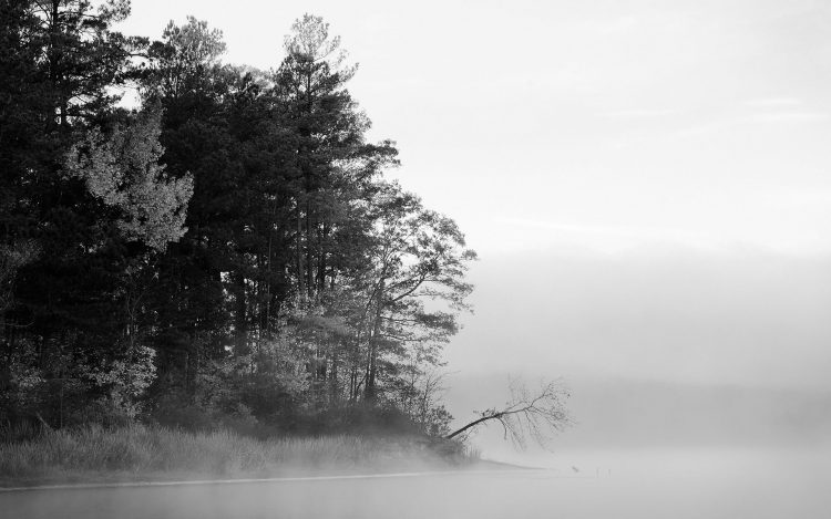 black and white fog forest Lake Trees water