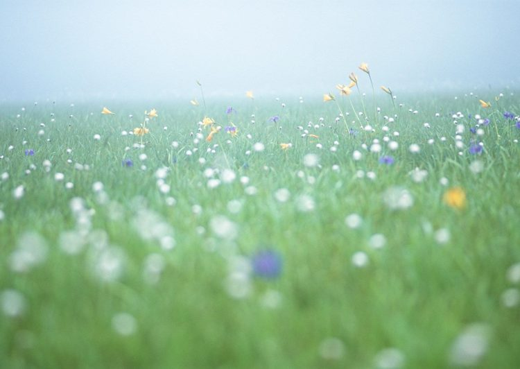 field, morning, freshness, Flowers, fog, , Pc, hd, wallpapers , desktop backgrounds, images, pictures