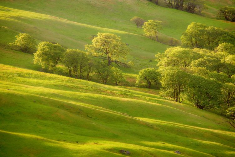 greens Trees slope hill grass