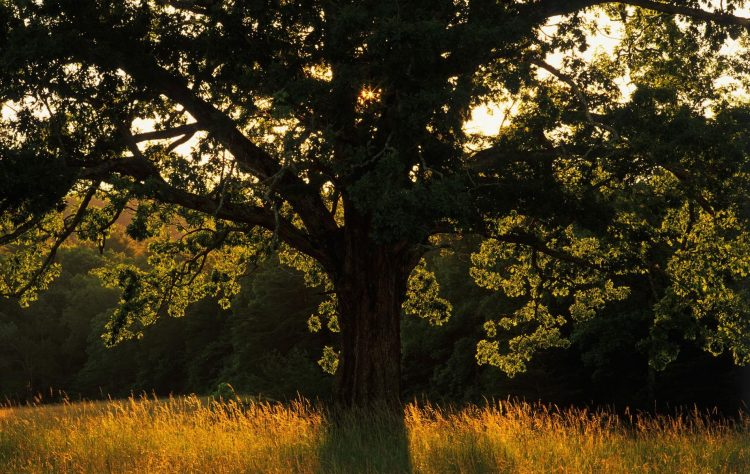 nature,Trees, light, Rays, grass, field, hd  desktop wallpapers , Pc backgrounds, free pictures