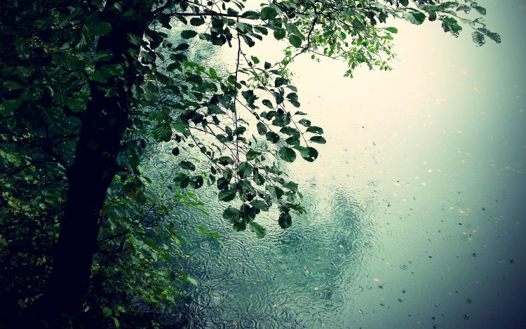 nature,Trees, rain, romance, puddles, hd  desktop wallpapers , Pc backgrounds, free pictures