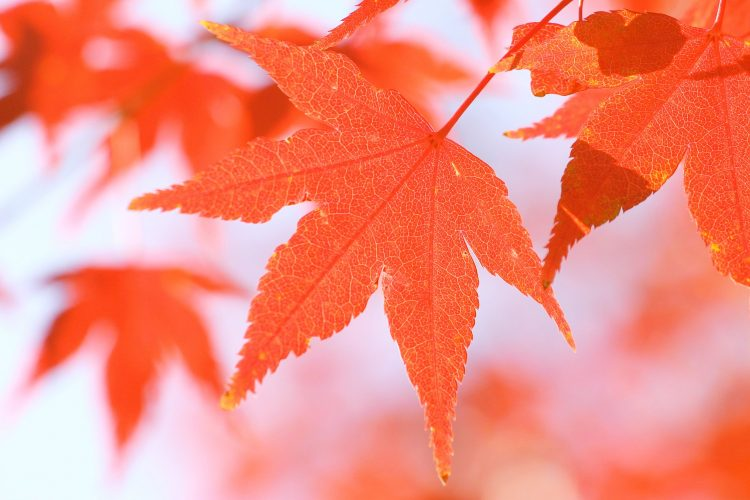 nature,autumn wallpaper, autumn, leaves, hd  desktop wallpapers , Pc backgrounds, free pictures