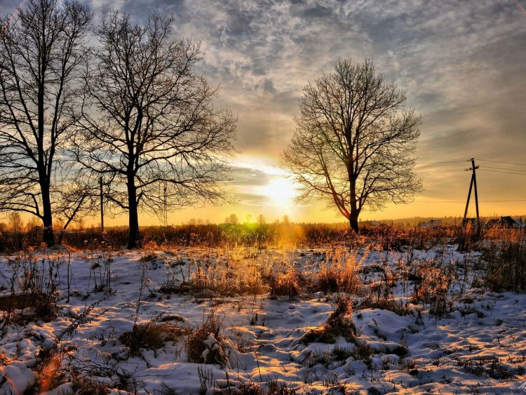 nature, трава снег, sunset, Trees, hd  desktop wallpapers , Pc backgrounds, free pictures