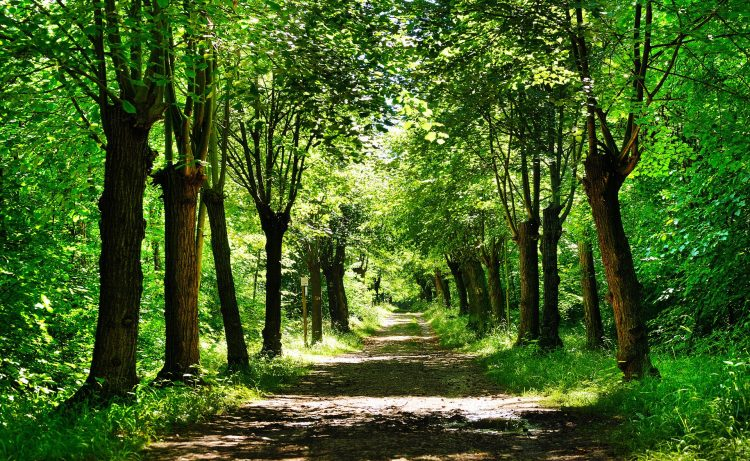 nature, Park, forest, Trees, road, greens, Plants, hd  desktop wallpapers , Pc backgrounds, free pictures