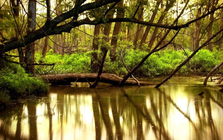 nature, Trees, Forest, water, river, hd  desktop wallpapers , Pc backgrounds, free pictures