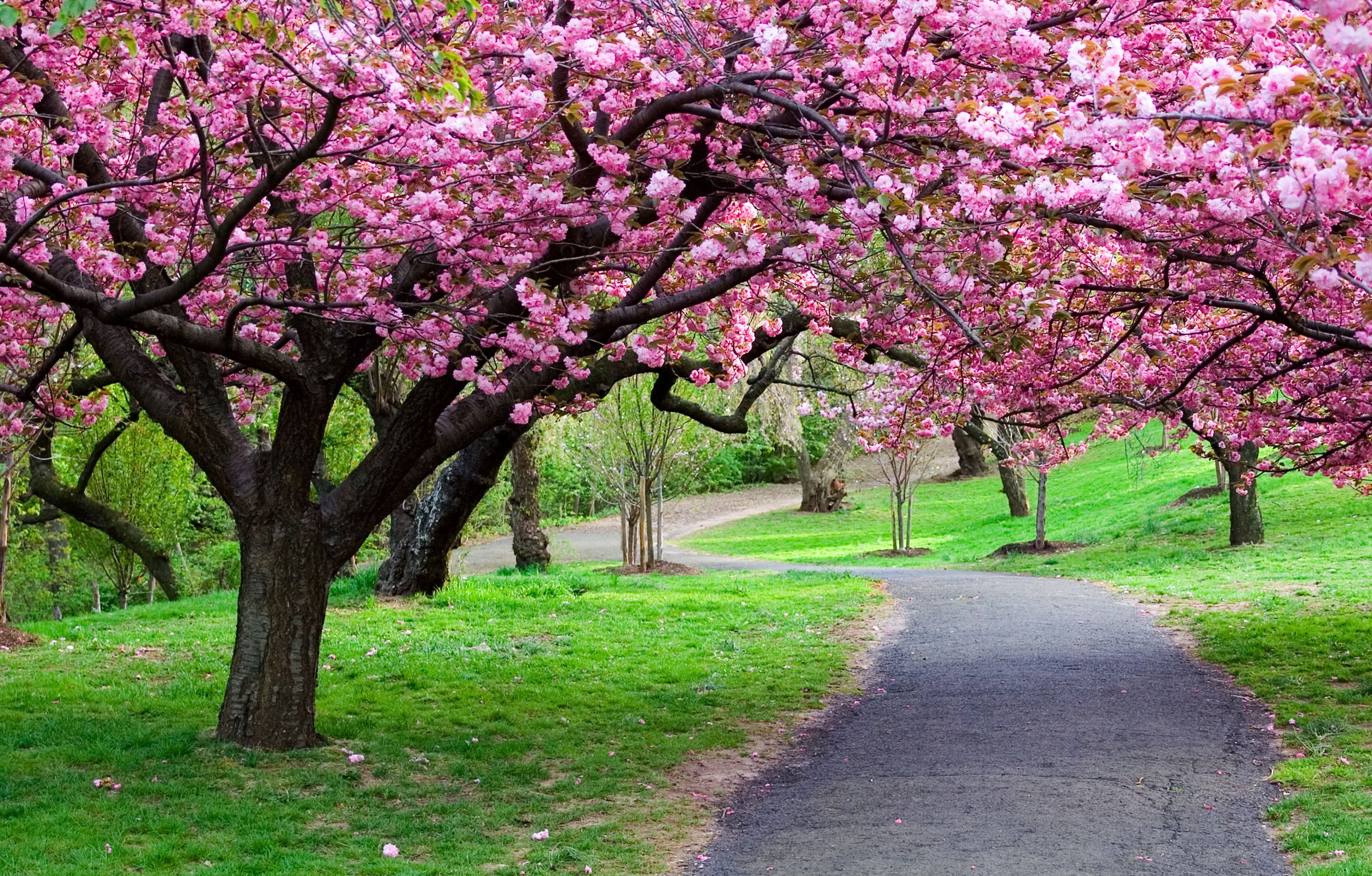 Nature Trees Forest Park Road Pathway Hd Desktop