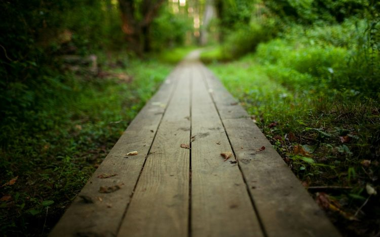 nature, landscape, board, wood, pathway, track, hd  desktop wallpapers , Pc backgrounds, free pictures