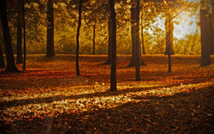 nature, photo, Trees, forest, Park, light, Rays, hd  desktop wallpapers , Pc backgrounds, free pictures