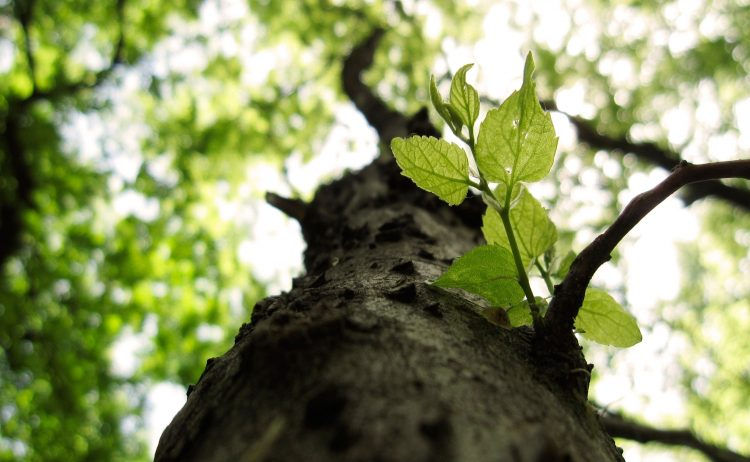 nature, tree, Macro, branches, leaves, hd  desktop wallpapers , Pc backgrounds, free pictures