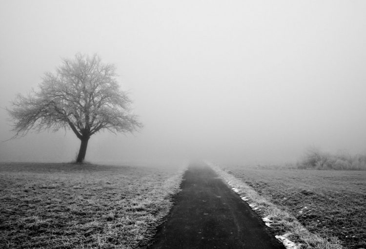 nature, winter, snow, fog, hd  desktop wallpapers , Pc backgrounds, free pictures