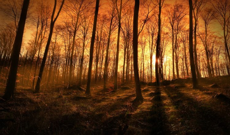 photo, forest, nature, light, Rays, evening, hd  desktop wallpapers , Pc backgrounds, free pictures